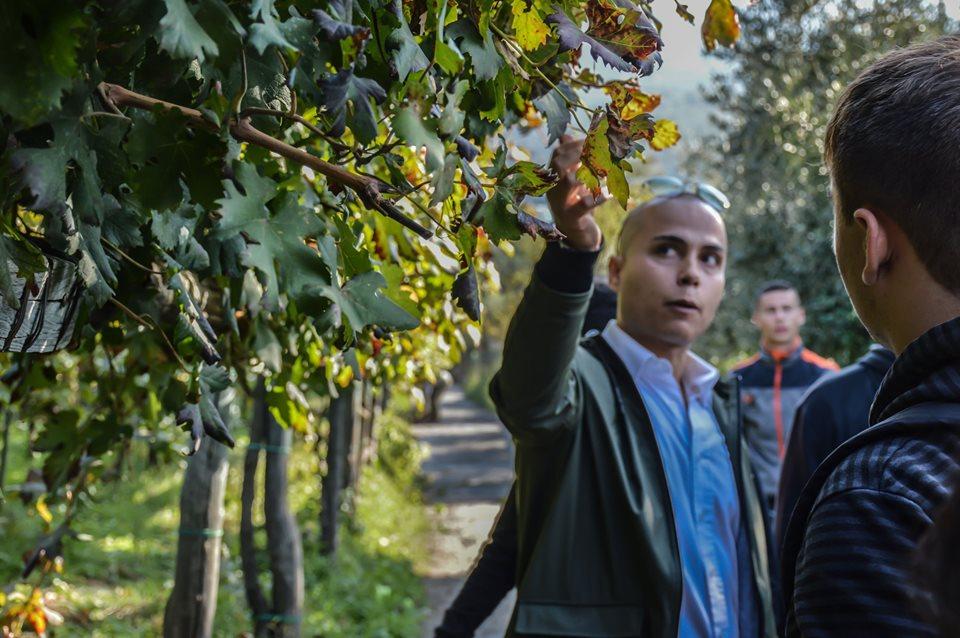 Studenti in vigna per raccogliere, vendemmiare l'Uva di Sabato