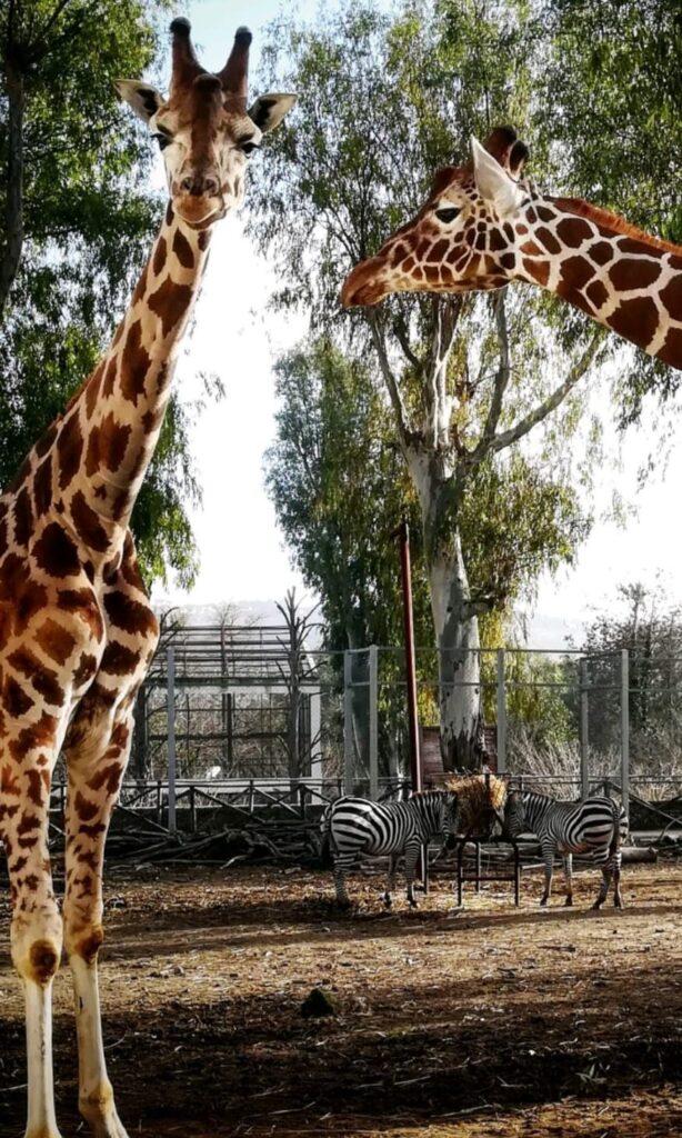 Lo Zoo di Napoli è aperto con tanti progetti, nuovi arrivi, storie da raccontare